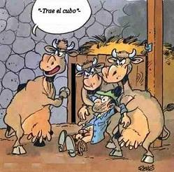 Vacas sádicas